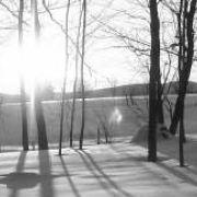 Paysage d'hiver dans un bois de Ham-Nord